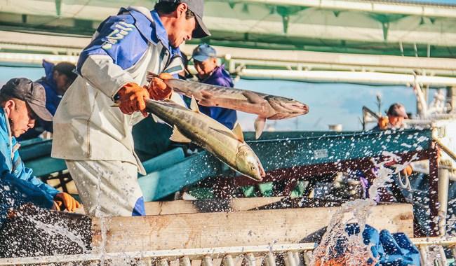 unseen-japan-shibetsu-salmon-fish-market