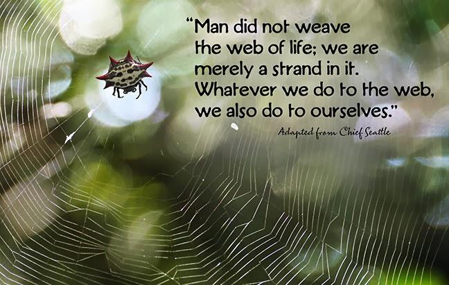 web-of-life-fb