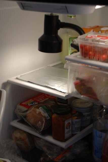 fridge-pic1