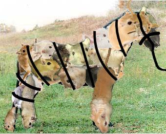 gerbil-pony