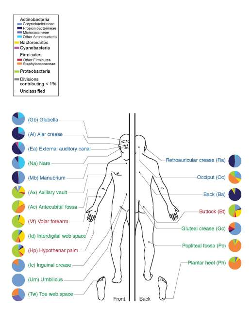 skin_microbiome20169-3001