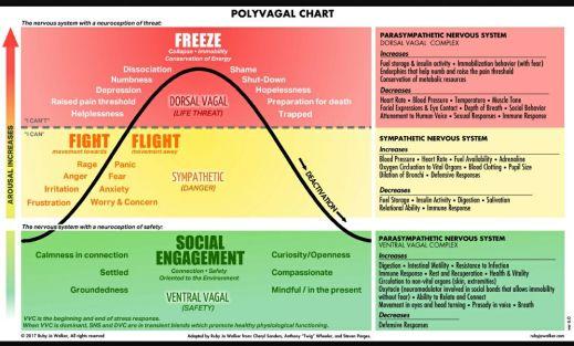 polyvagal+chart+-+Autonomic+nervous+system