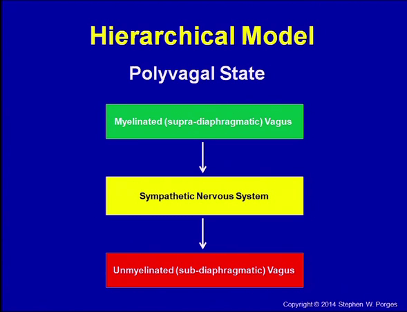 polyvagal-theory