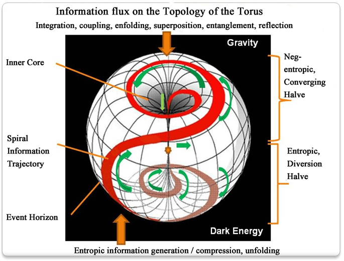 Processes of Science and Art Modeled as a Holoflux of Information Using Toroidal Geometry | Dirk K. F. Meijer