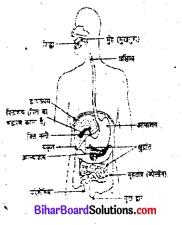 जंतुओं में पोषण कक्षा 7 विज्ञान Bihar Board Chapter 2