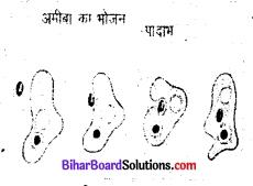जंतुओं में पोषण कक्षा 7 Bihar Board Chapter 2