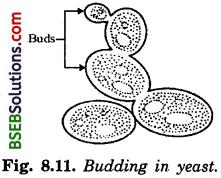 Bihar Board Class 10 Science Solutions Chapter 8 How do Organisms - 2