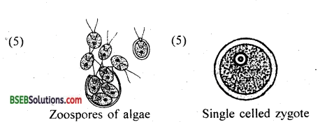 Bihar Board Class 12 Biology Solutions Chapter 1 Reproduction in Organisms 2