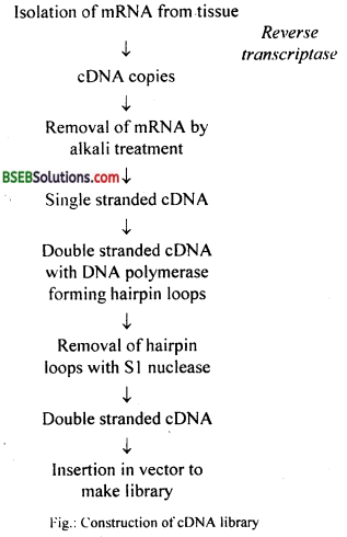 Bihar Board Class 12 Biology Solutions Chapter 11 Biotechnology Principles and Processes 4