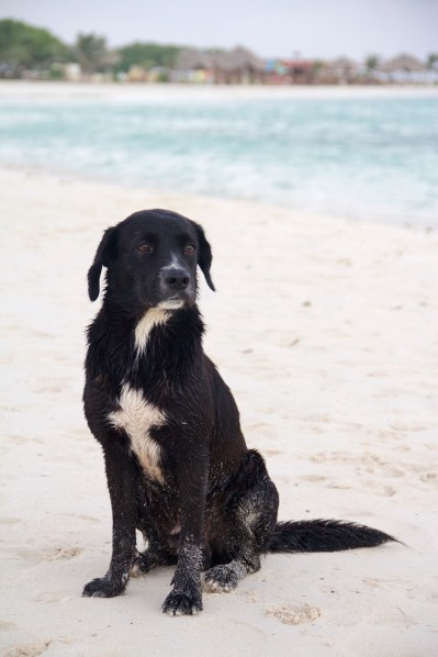 Aruba Caribbean Vacation BS in Bmore 20