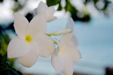 Aruba Caribbean Vacation BS in Bmore 24