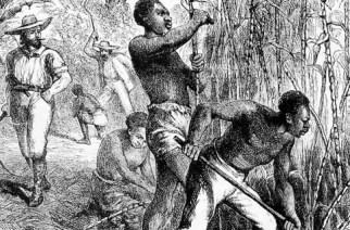How Slaves Built American Capitalism