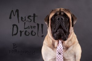 Must Love Drool Cover