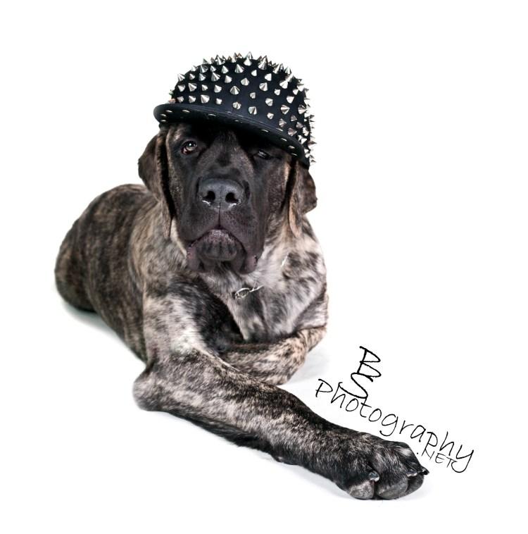 Spikey Hat Mastiff