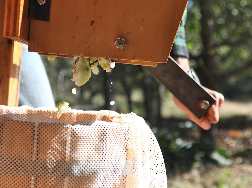 Chunks of apple ground into the bucket where they'll be pressed. (Dave Askins/Beacon)
