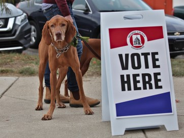 A few of the choices on the ballot might give some voters paws. (Dave Askins/Square Beacon)