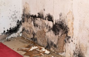 mold restoration company in medina ohio picture of black mold on a wall with drywall falling onto the floor