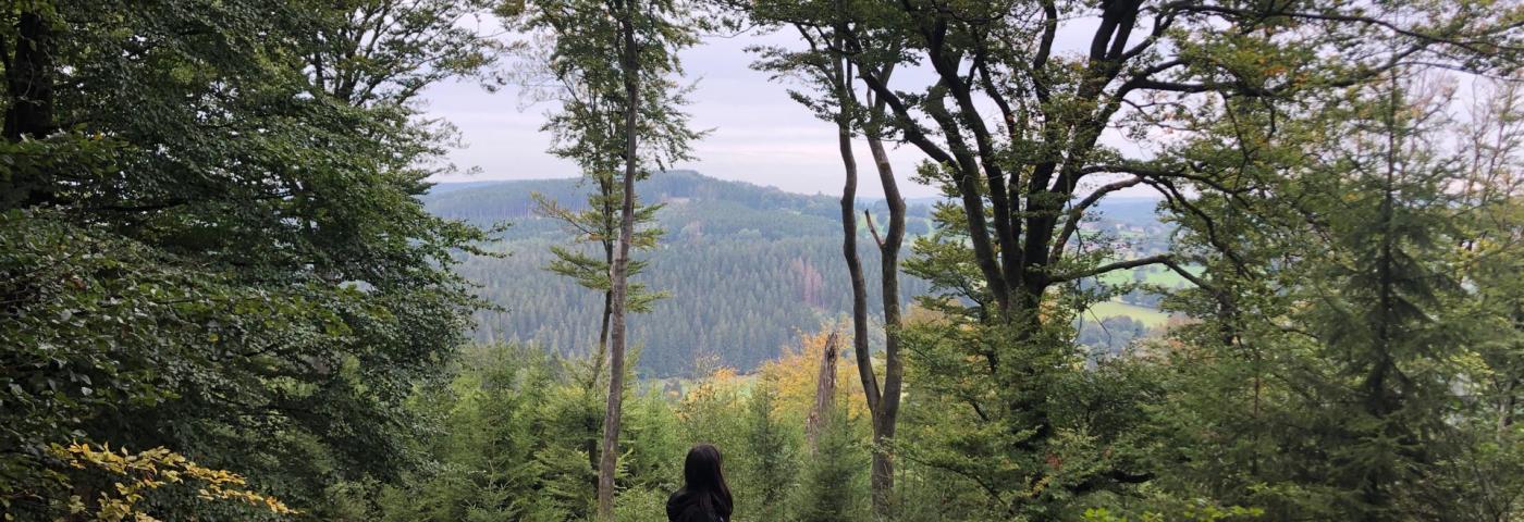 Romantikwanderung durch den Wald (I)