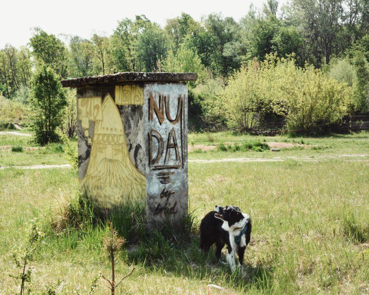 pies nie lubi przytulania - border collie - nuda - bthegreat.pl
