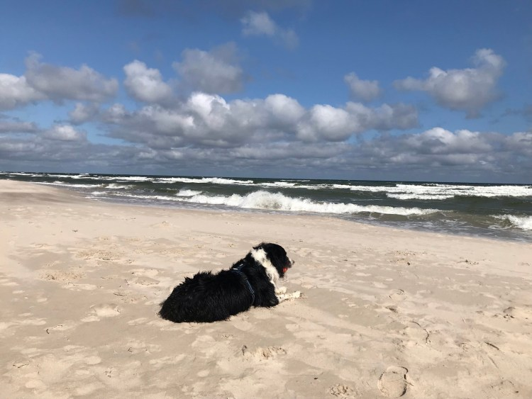 pies na plaży - bthegreat.pl- border collie - urodzinowe o wszystkim i o niczym
