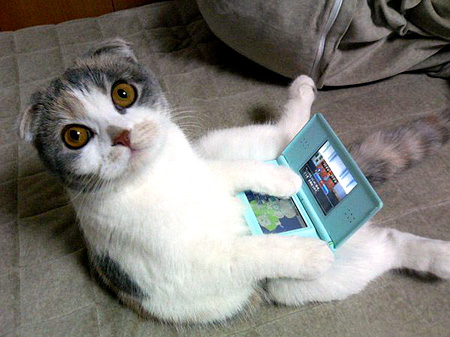 a pussy playing with its nintendo ds