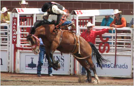 The Calgary Stampede Rodeo