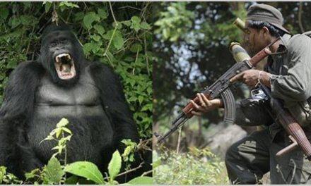 Grammar 101: Gorilla or Guerrilla