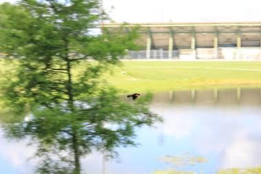 Perkins Road Community Park Baton Rouge Louisiana (75)