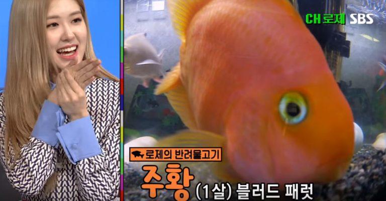 ロゼのお魚ペット、チュファン🐡とウンビョル🐟!