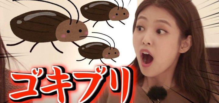 【動画】1日に3匹ゴキブリが出た話【BLACKPINK日本語字幕】