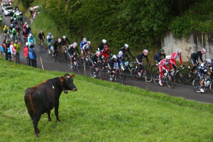 Paris-Roubaix, Fléche Wallonne E Liège-Bastogne-Liège Canceladas | Fléche Wallonne Paris-Roubaix