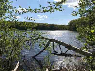 Berry Pond glints in afternoon light in Pittsfield State Forest. Photo by Kate Abbott