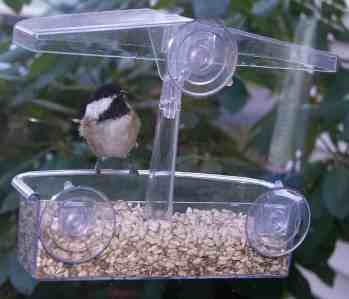 3. Black-capped Chickadee — the Massachusetts State Bird is a year-round resident, easily tamed and ready to scold when seed runs out. They will feed from a hand to sock feeder, most commonly though at a tube feeder. They may be the easiest bird to attract. (BOSS, BOSSH, SFL, NGR, PNTH). Photo by Thom Smith