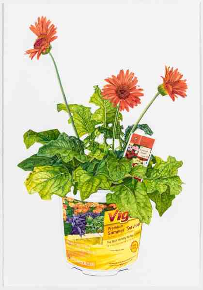 Jessica Rohrer's 'Gerbera,' gouache on paper, appears in Ecophilia at the Berkshire Botanical Garden. Courtesy of the artist and BBG.