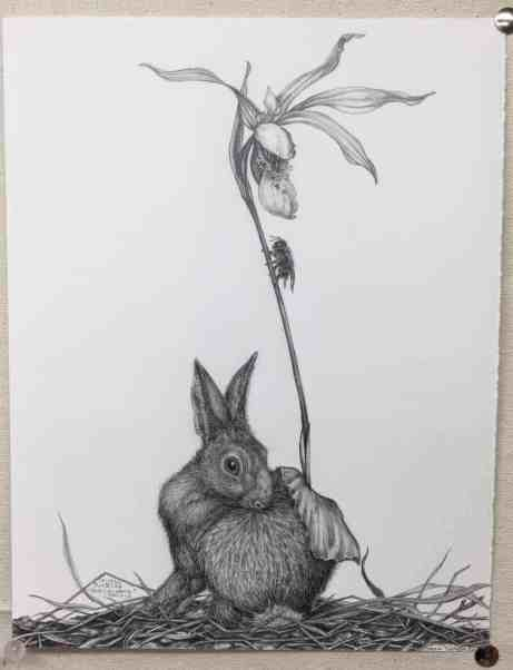 Tara Tucker's 'Fairy Slipper Orchid,' graphite on paper, appears in Ecophilia at the Berkshire Botanical Garden. Courtesy of the artist and BBG.