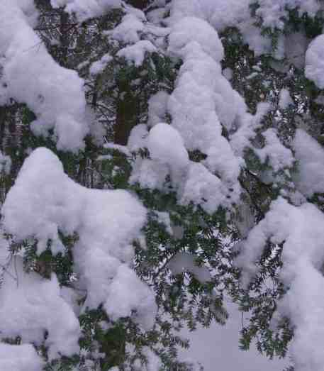 Fresh snow piles and hemlock trees on a December morning at The Boulders in Dalton. Photo by Thom Smith