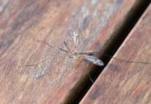 mug muggen bestrijding