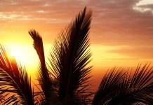 Réunion zonsondergang palmboom