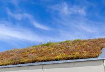 Groendak sedumdak groen dak sedum vetplanten