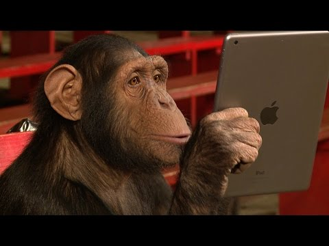 Chimpanzee Reacts Adorably To iPad Magic