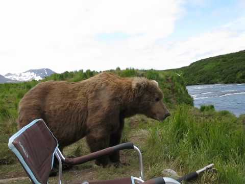 What Would You Do When A Grizzly Bear Sits Next To You?