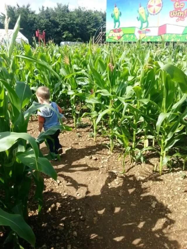 through the maize maze