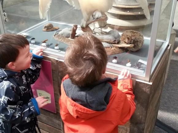 hedgehog natural history museum