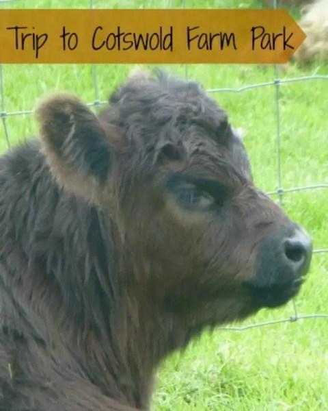 cotswold-farm-park-trip-bubbablue-and-me