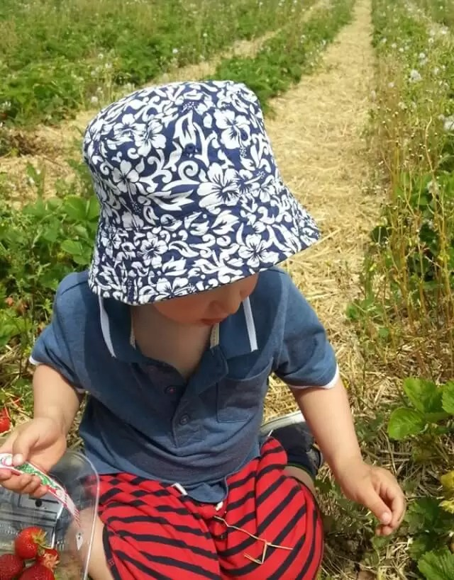 strawberry picking down the row..