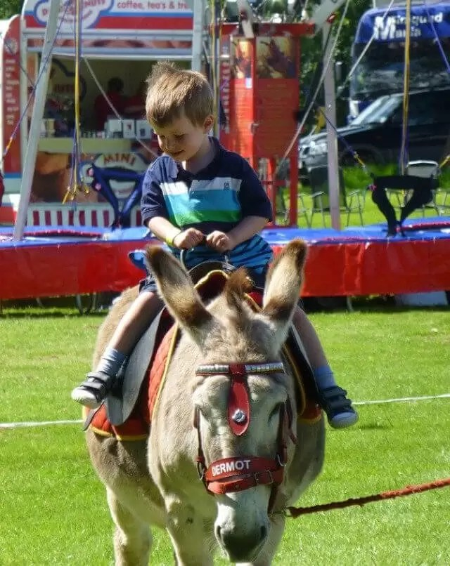 donkey-rides-at-Tractor-Ted-show.
