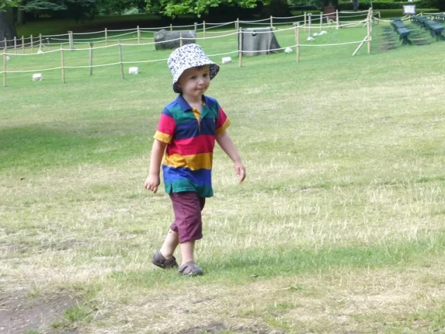 stripy polo shirt joules