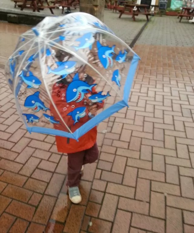 bell shark umbrella