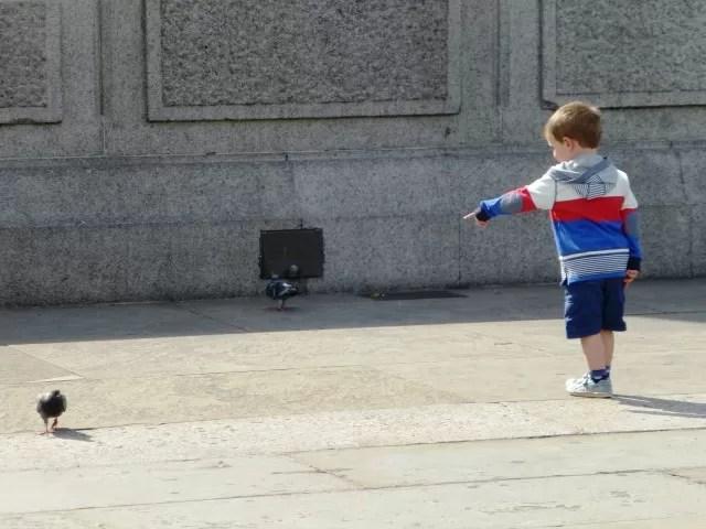 chasing pigeons in trafalgar square