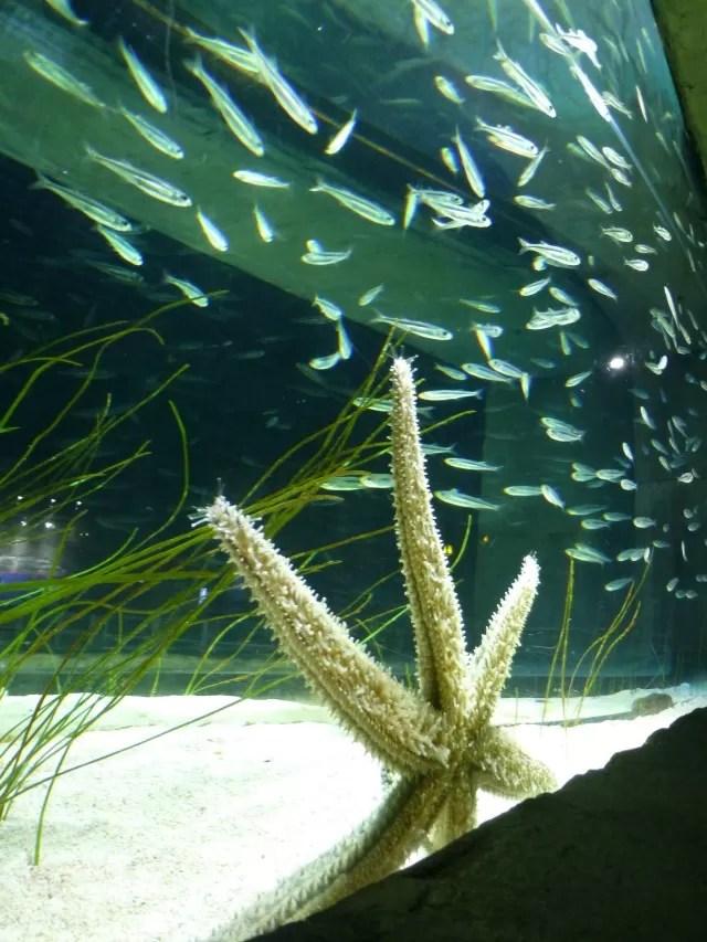 fish shoals and starfish c